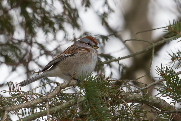 ATS 5846 - Fall Migration: It's More Than Just Birds Leaving