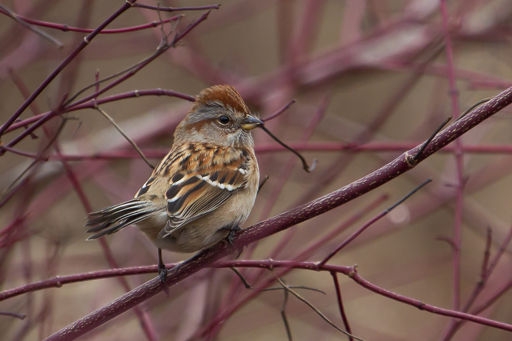 10912006904 7ff3864de0 o1 - Attract More Birds To Your Yard By Planting Native Plants