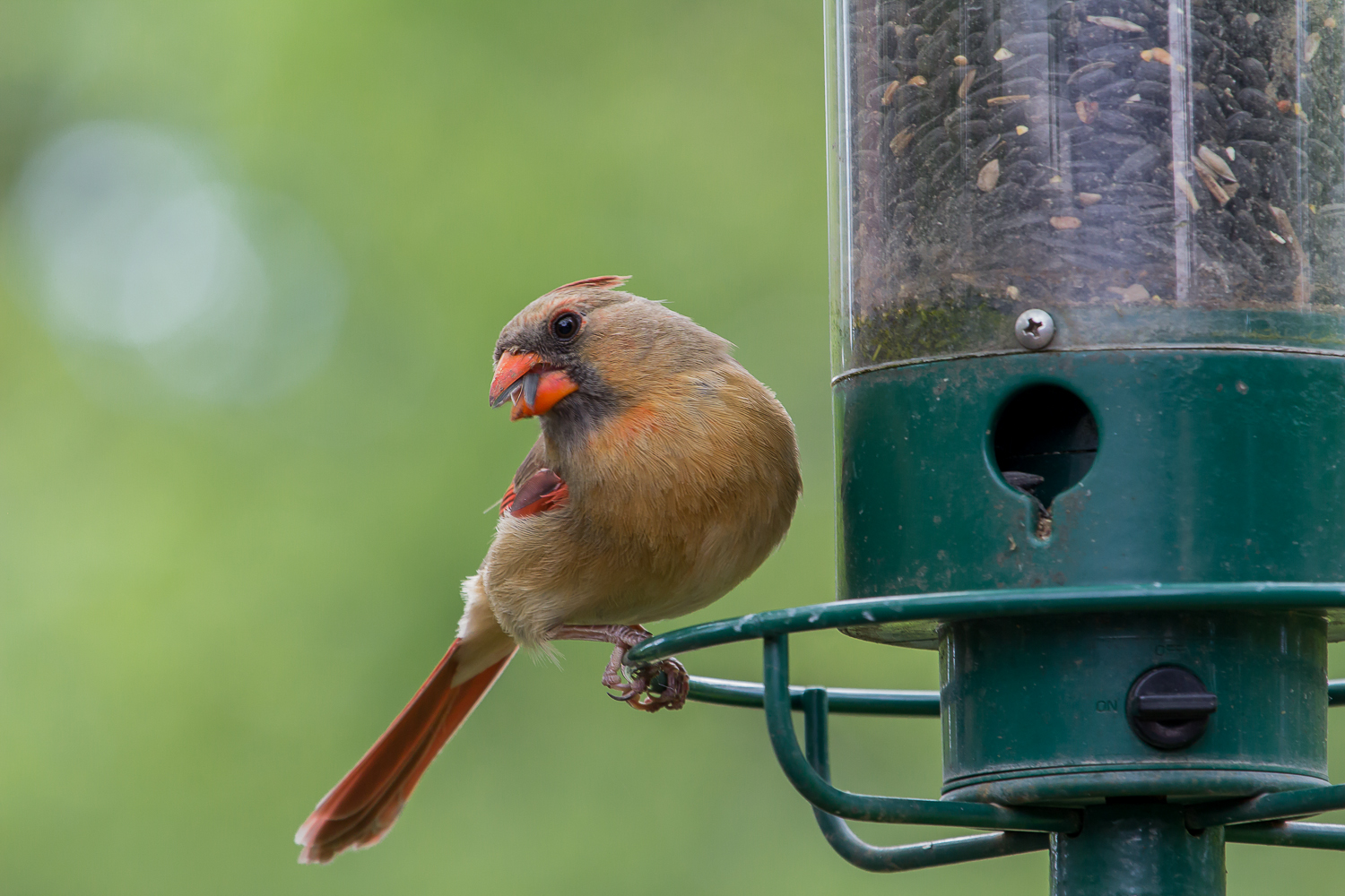 IMG 4162 1 - Spring Cleanup Will Ensure The Health Of Your Backyard Birds