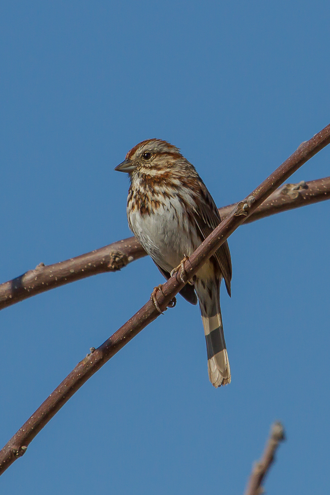 IMG 0653 1 2 - Good Birding Weekly Report: London, ON March 30 - April 5 2014