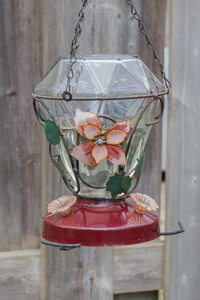 IMG 2504 1 - How To Attract The Beautiful Ruby-Throated Hummingbird To Your Backyard