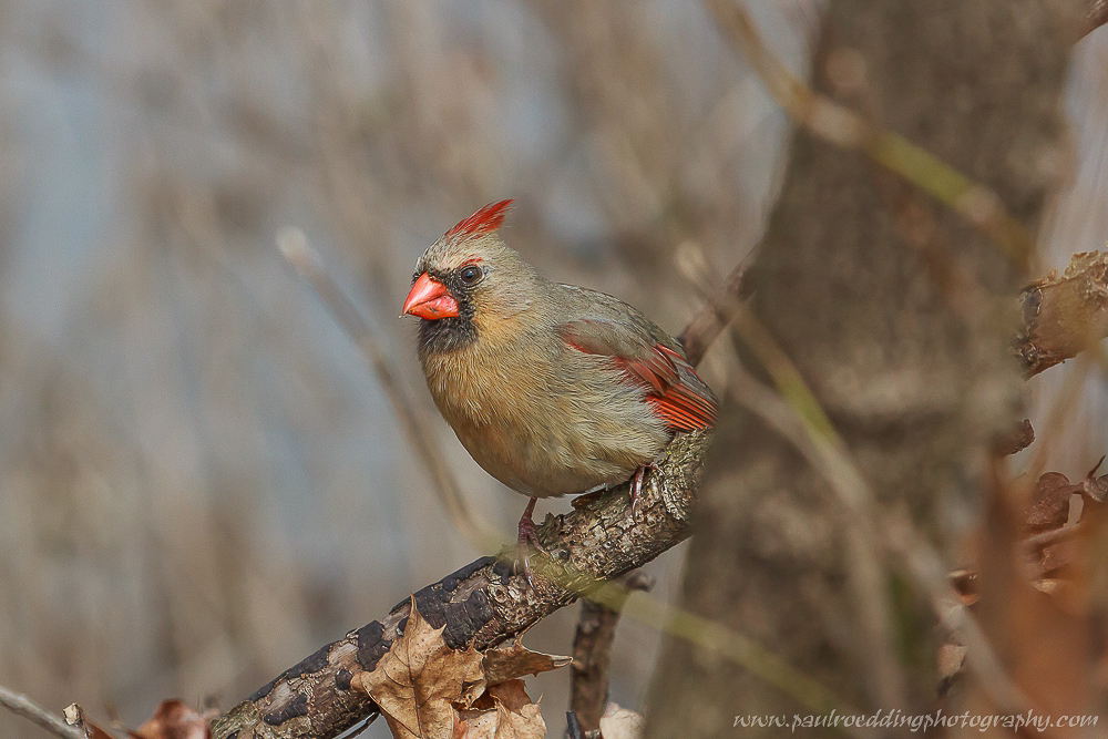Watermark 1 23 - Spring Yard Cleanup, It's For The Birds