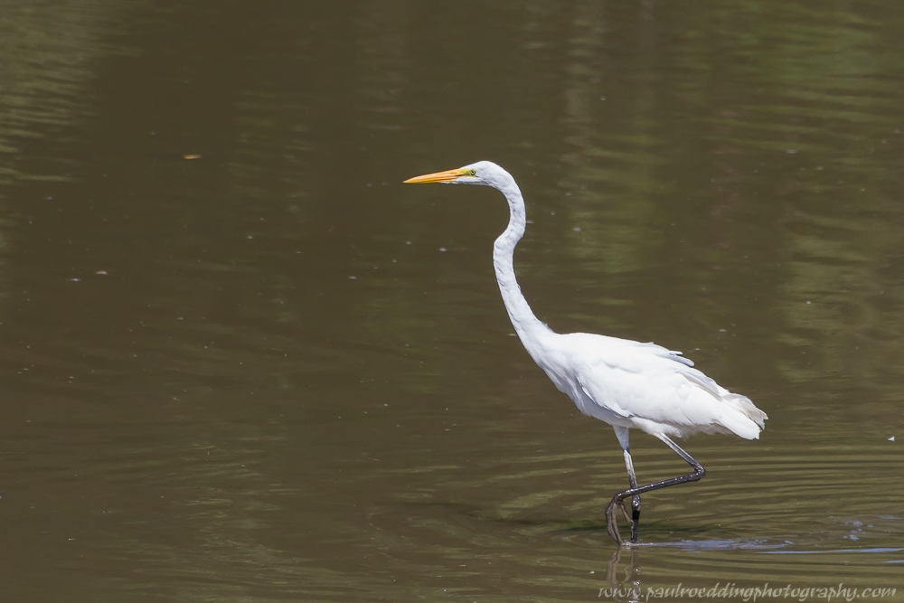 eeee - Good Birding Report: London, Ontario <br> August, 28 - September 4, 2015