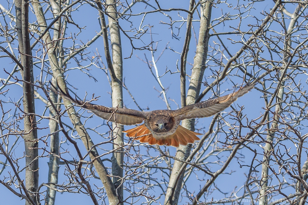 come - Late Fall Is A Great Time To Observe Raptors