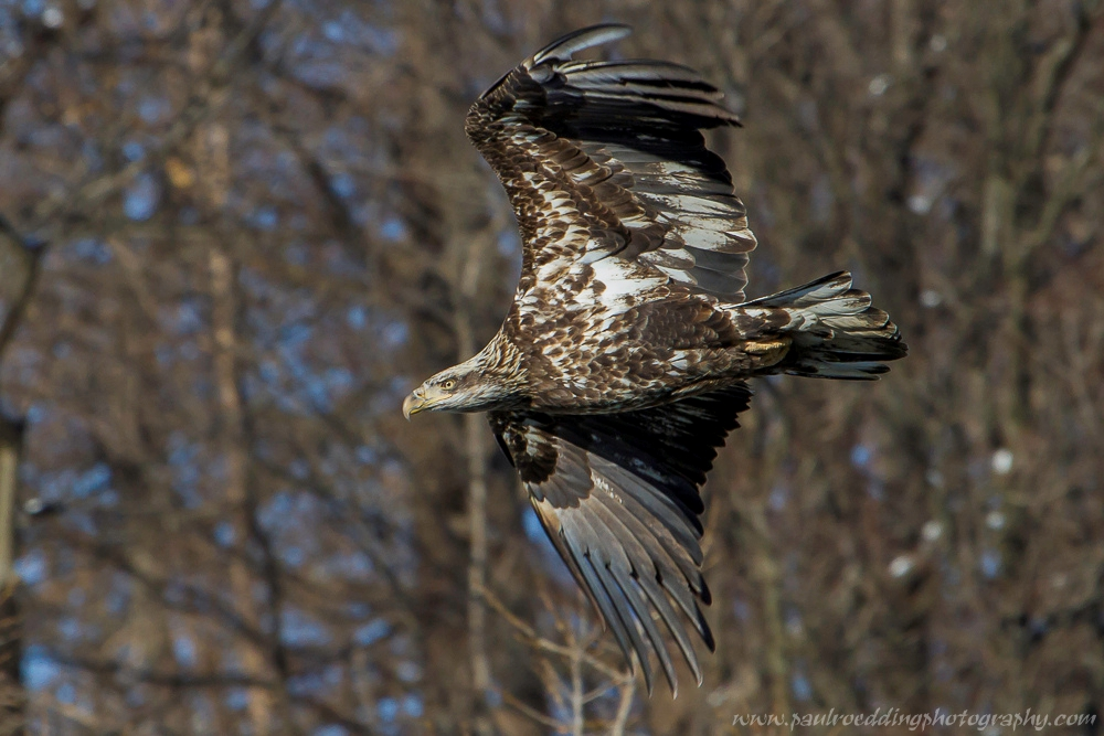 ie - Late Fall Is A Great Time To Observe Raptors