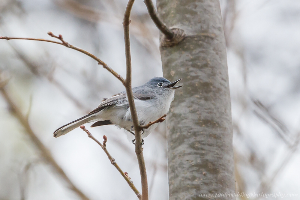 gc - Good Birding Report: London, Ontario <br> April 21 - 29, 2016