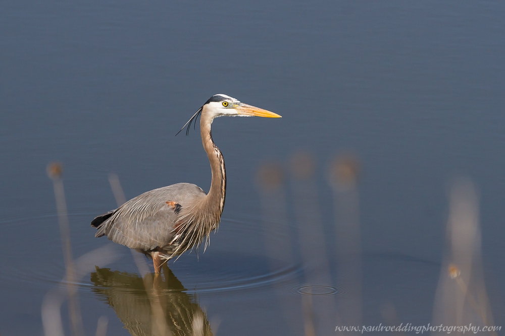 gbh - Stormwater Management Ponds: <br> Often Overlooked Birding Hotspots
