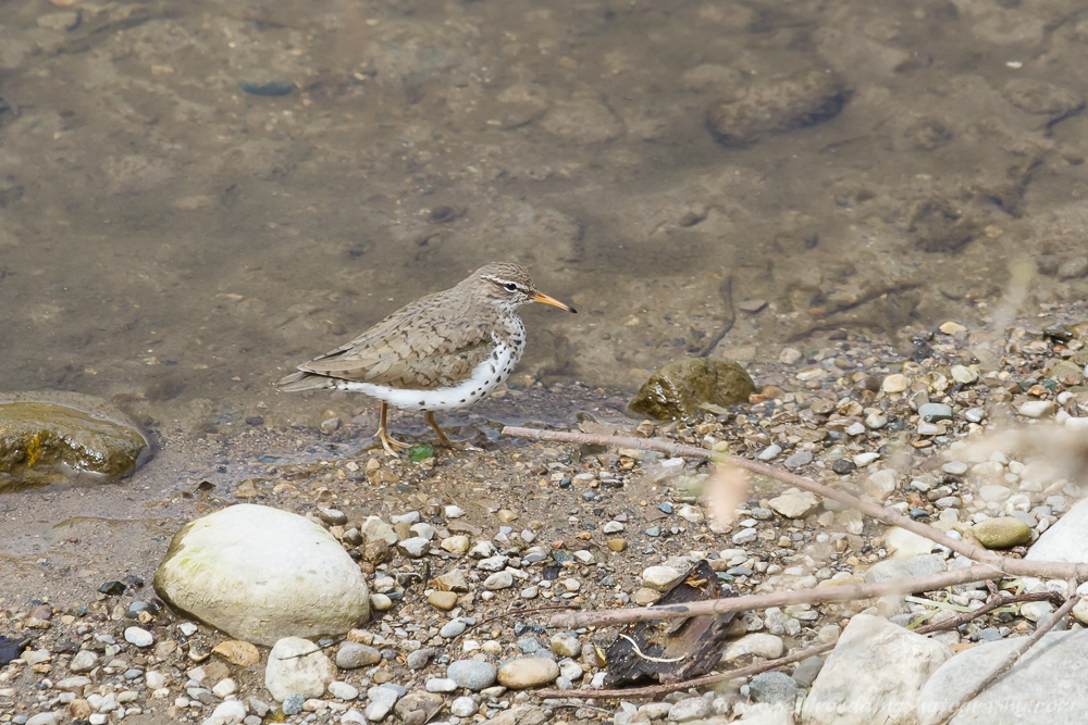 sandy - Stormwater Management Ponds: <br> Often Overlooked Birding Hotspots