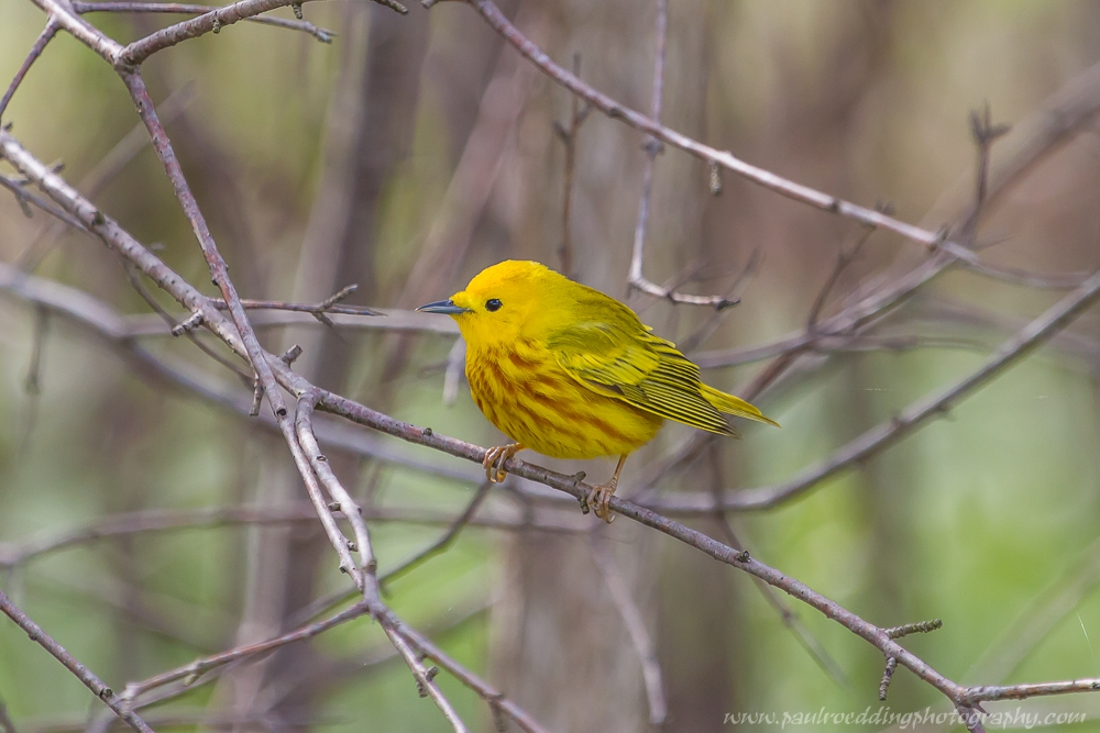 yw - John E. Pearce Provincial Park Reveals A Nice Mix Of Species At Risk