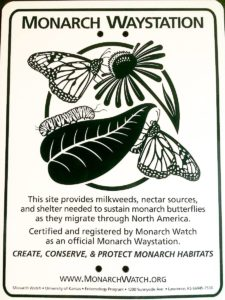 12087671 787618071361644 5659097381689162113 o 225x300 - If You Plant It, They Will Come: <br> Success From My Monarch Waystation