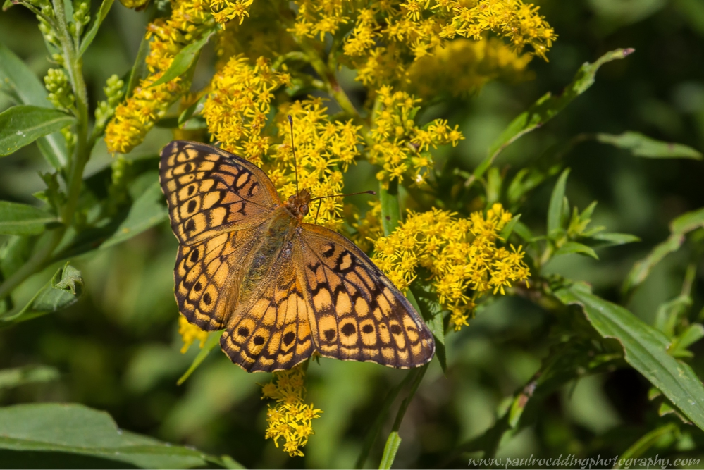 tawny - Breathe Easy: Dispelling The Goldenrod Myth