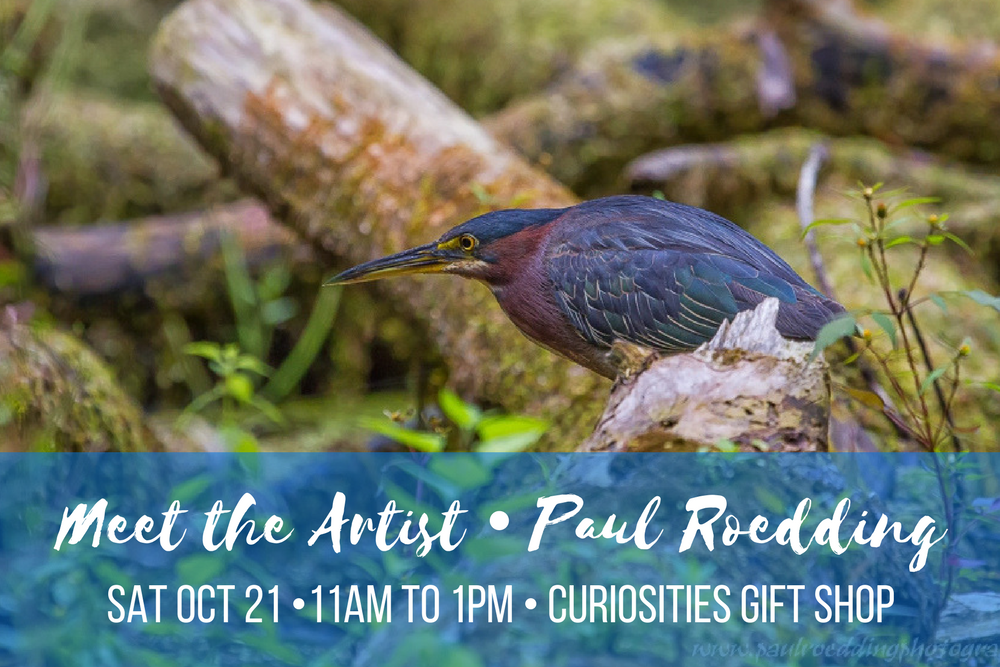 Meet the Artist Paul Roedding Saturday October 21, 2017 11 AM to 1 PM at Curiosities Gift Shop