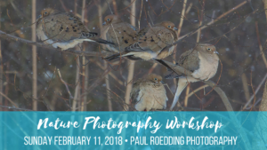 Nature Photography Workshop February 11 2018 300x169 - Taking Care Of Backyard Birds During Cold Weather