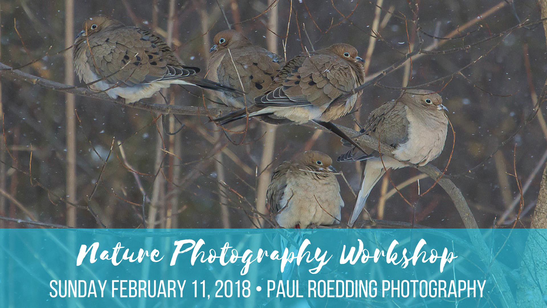 Nature Photography Workshop February 11 2018 - Upcoming Events