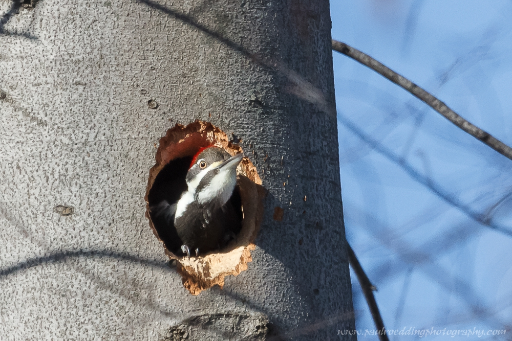 Woodpeckers and other cavity nesters will be attracted to dead limbs and branches left around your property.