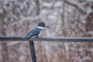IMG 2294 Edit Edit 300x200 - Taking Care Of Backyard Birds During Cold Weather