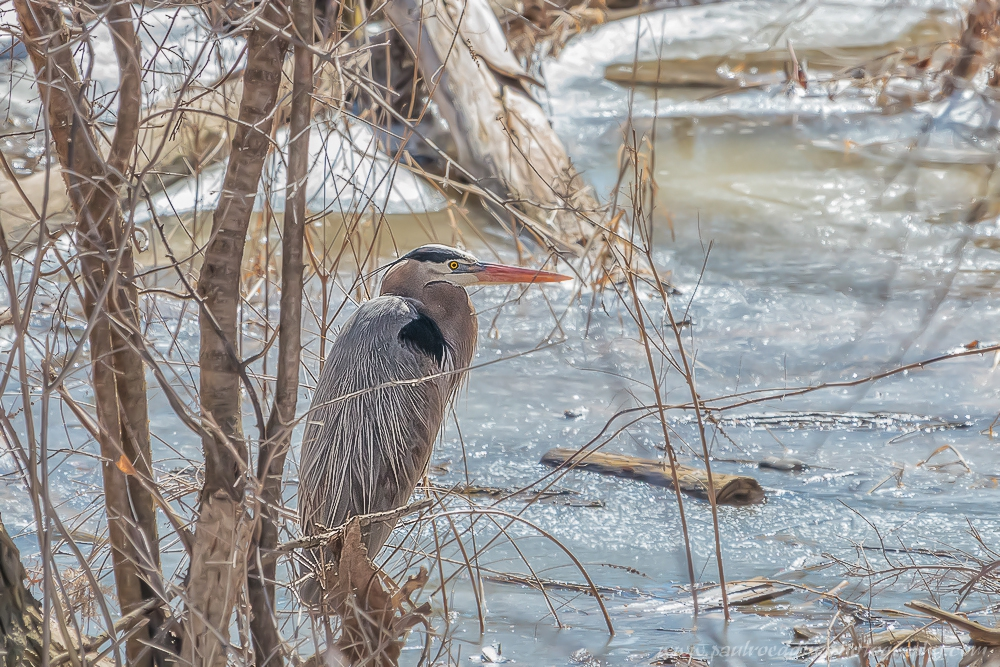heron - The Best Gloves For Winter Birding and Photography
